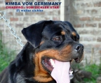 breeders Dogs Rottweiler
