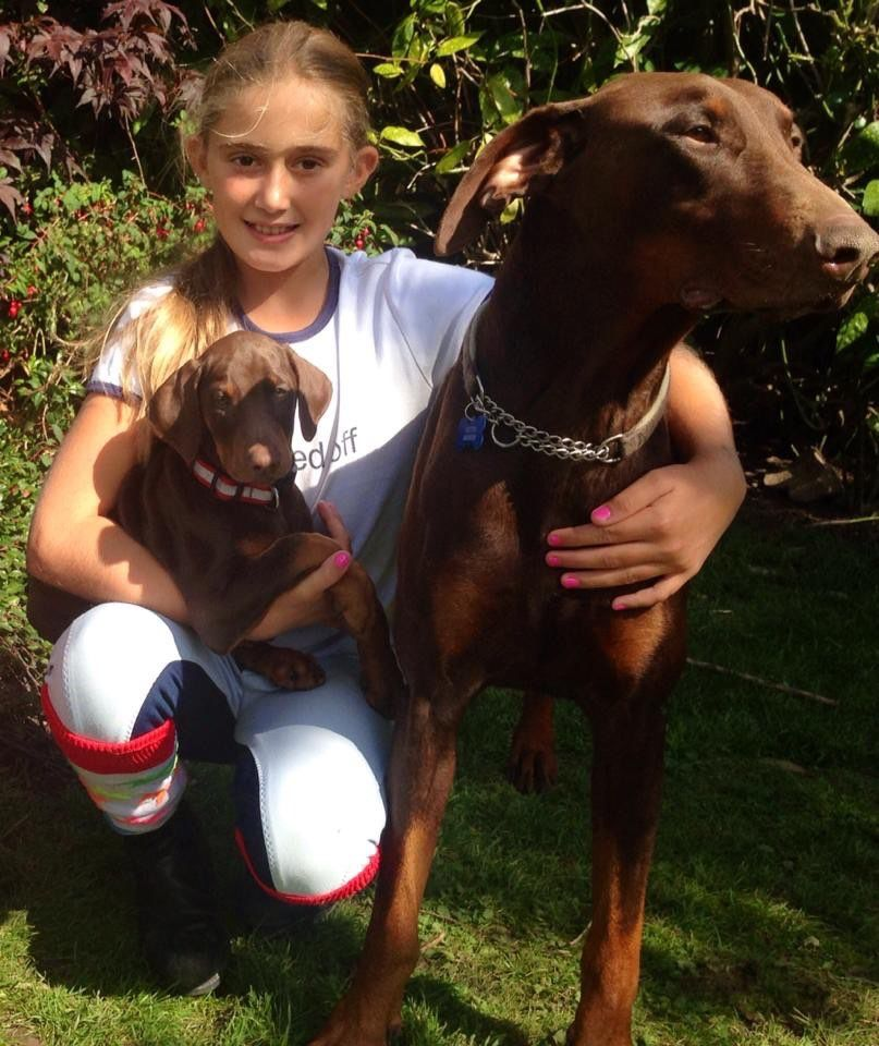 Kc Registered Dobermann Puppies For Sale