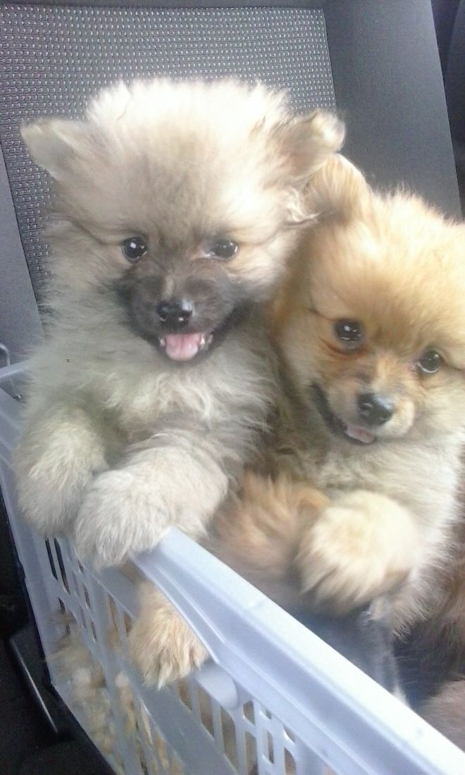 Dogs For Adoption Sligo